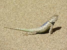 casa-grande-lizard-colors